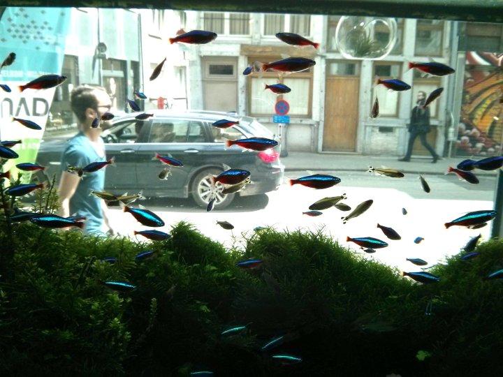 Vissen Antwerpen