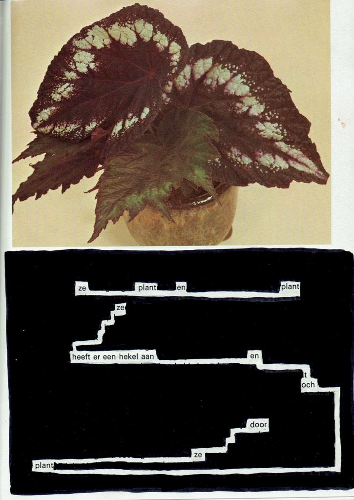 stiftgedicht-plant